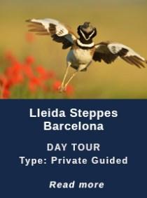 LLEIDA-STEPPES