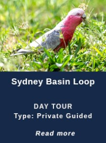 SYDNEY-BASON-LOOP