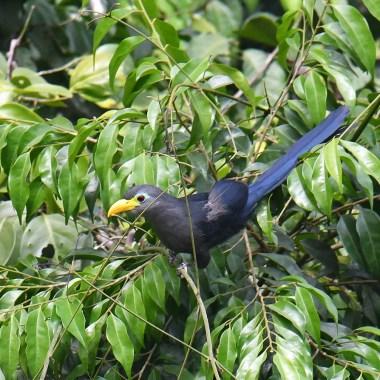 Ghana Birding