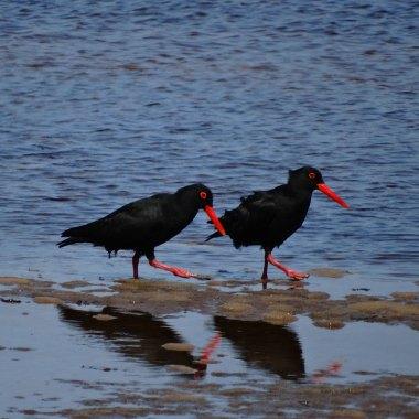namibia-endemics-birding