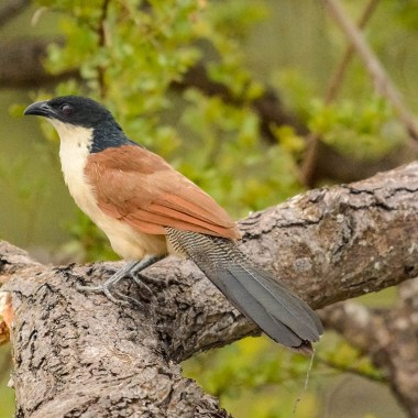 Birding Tours in South Africa