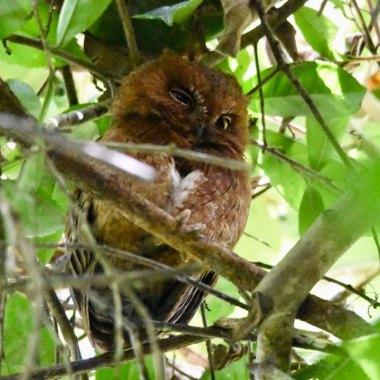 Birding Madagascar