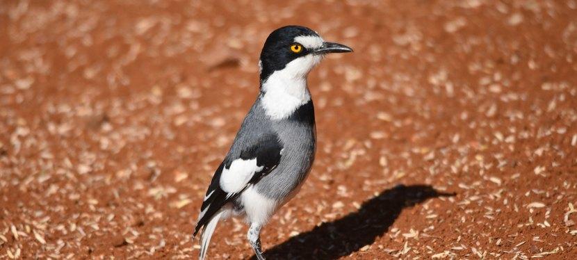 Short Namibia Endemics