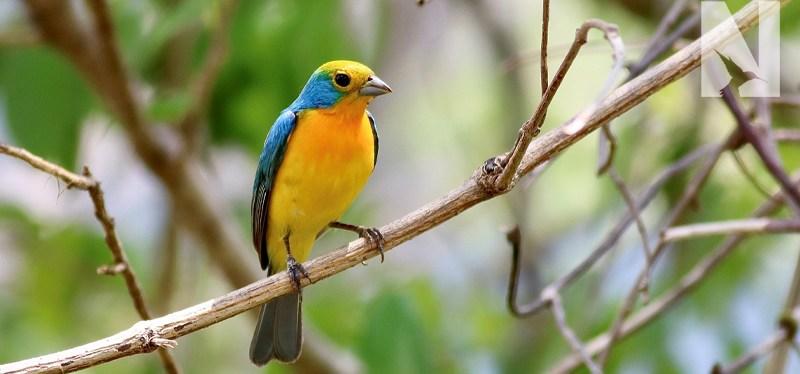 Mexico Birding Tour
