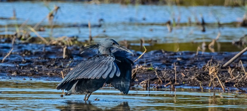 Namibia Bespoke Birding Trip Report
