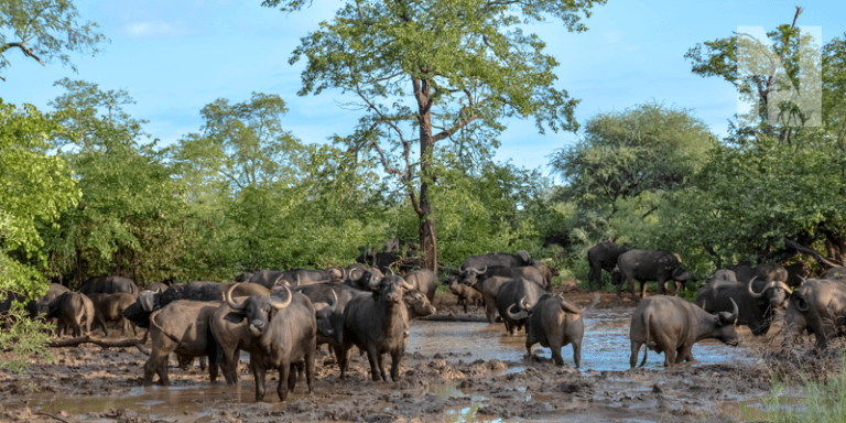 HEADER-IMAGE-northern-kruger.png