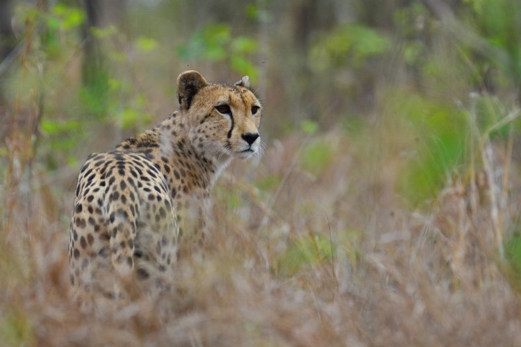 Day trip to the Kruger