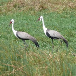 Endemic Birds of Namibia