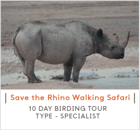 SAVE-THE-RHINO-WALKING-SAFARI-TEASER.png