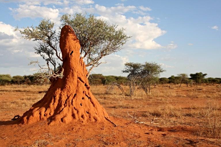 Termite Mound.jpg