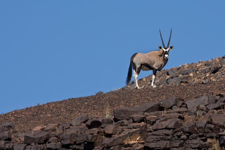 Gemsbok in Namibia, Kunene with Nature Travel Namibia