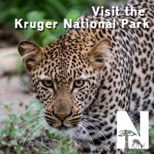 Visit the Kruger Park with Nature Travel Kruger