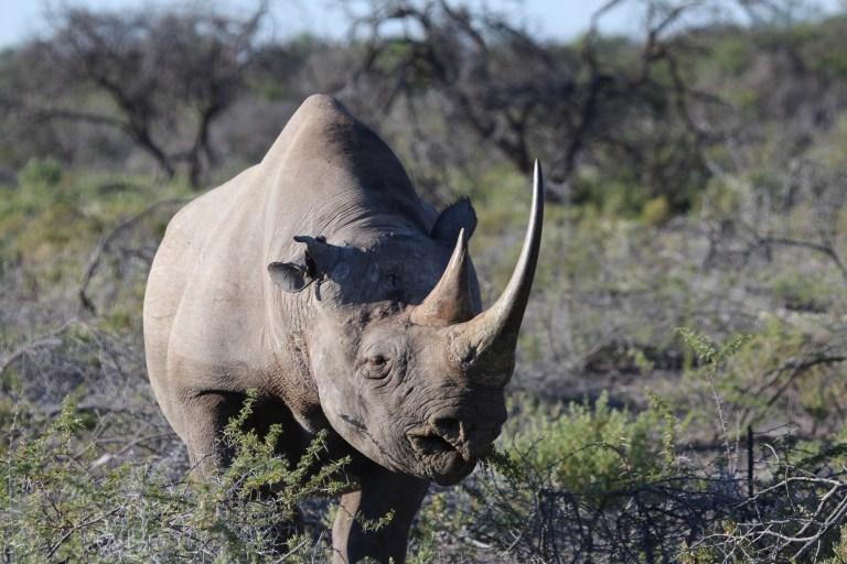 Black Rhino (5).JPG