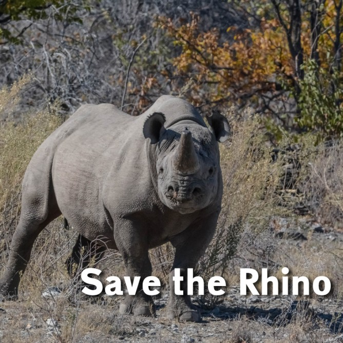YMA-save-the-rhino.jpg