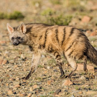 15-Day Namibia Conservation Safari