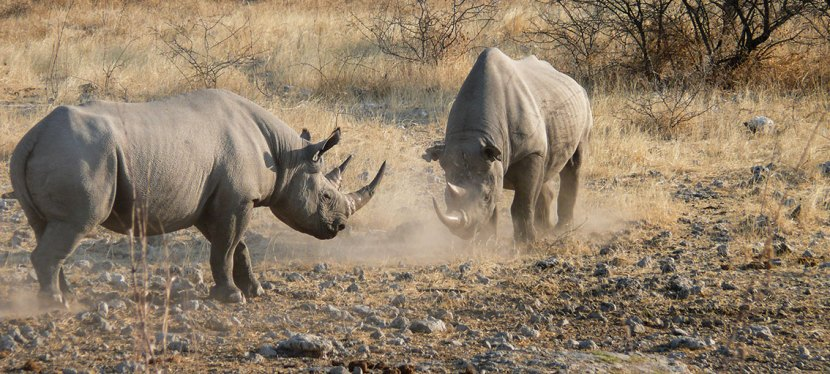 10-Day Classic Namibia Conservation Safari
