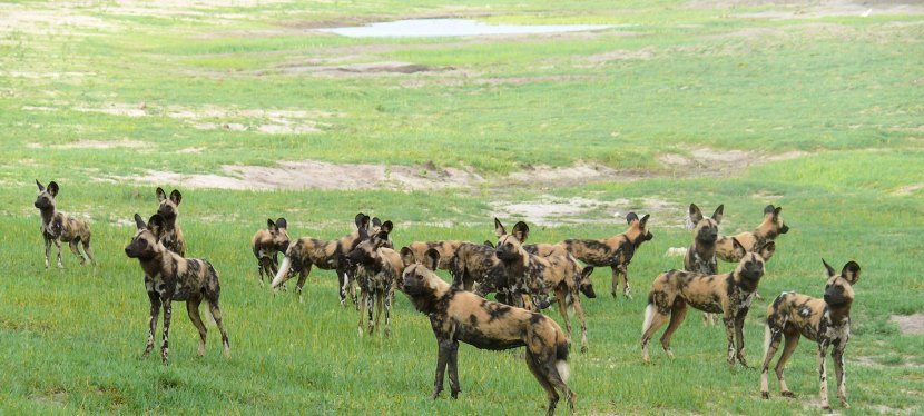 Kavango-Zambezi Safari