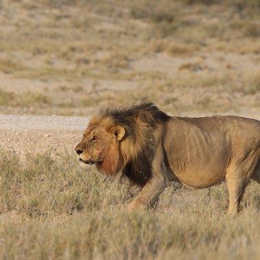 7-day-namibia-safari