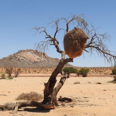 Namib-desert-scenery