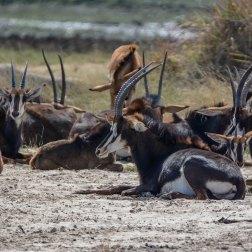 Namibia Mammal Safari