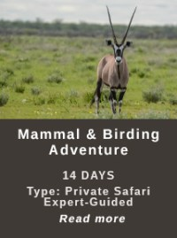 Mammal-and-Birding-Safari
