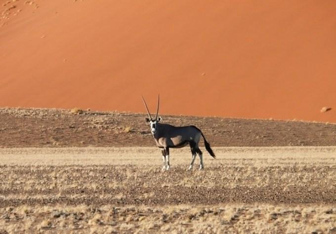 Namib-Naukluft-Park-(4)