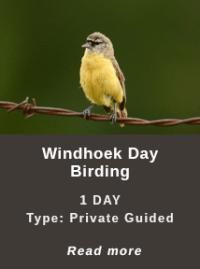 Windhoek-Day-Birding