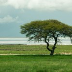 Etosha-after-the-rains