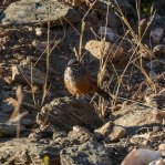 Namibia Bespoke Birding