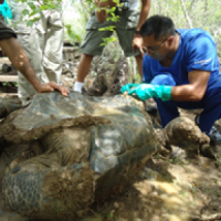 Darwin Animal Doctors: Vet Care for All Galápagos Animals