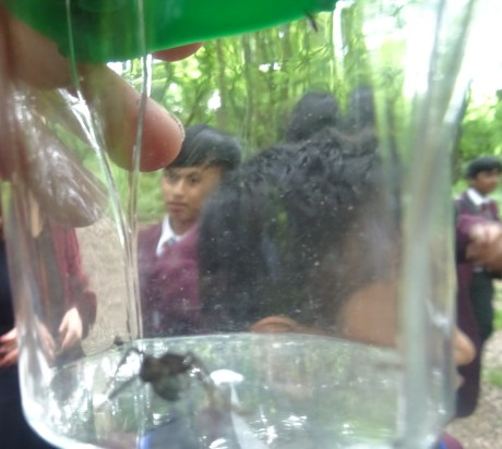 Nature Vibezzz Insect Hunt Secondary School Streatham Lambeth