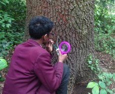 St Josephs College School Student using pooter on insect survey Streatham Common Lambeth London