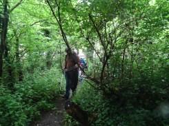 Kingihts Hill Wood - Capital Clean Up-1