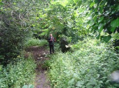 Kingihts Hill Wood - Capital Clean Up day-2