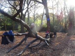 free-forest-school-activity-for-primary-school-students-streatham-common-lambeth-4