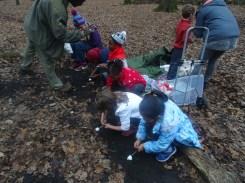 last-free-forest-school-activity-for-primary-school-children-on-streatham-common-lambeth-8