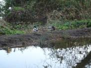 Granton Primary Year 5 students pond dipping Lambeth-13