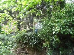 free family nature activity Knight Hill Wood Lambeth London-6