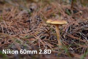 Baggrundsgengivelse 60 mm makro
