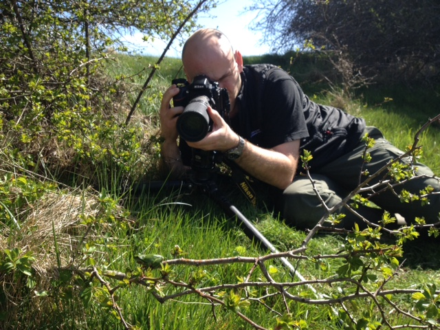Naturfotograf Mikkel Jezequel fotograferer løvfrø på Als