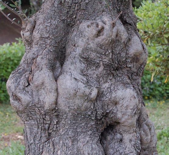 Wesenheiten im Baum