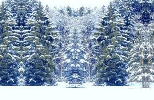 Schneewesen