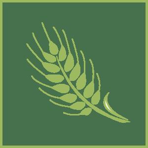 Silhouette. Getreide. Ähre, Weizen, Landwirtschaft