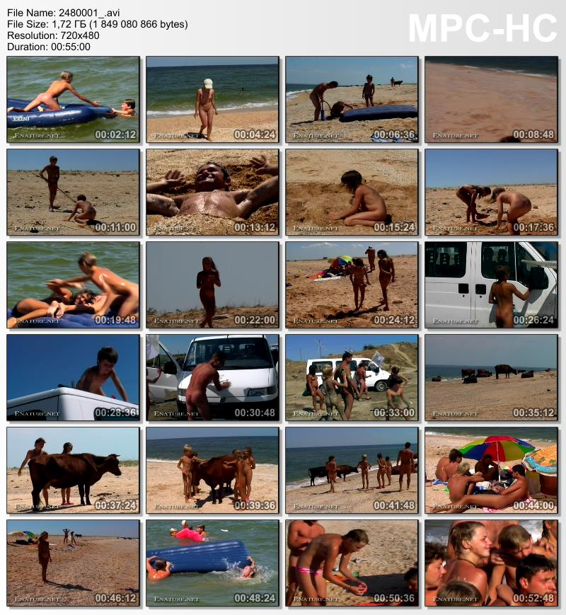 Naturist families stroll along the beach with bulls video