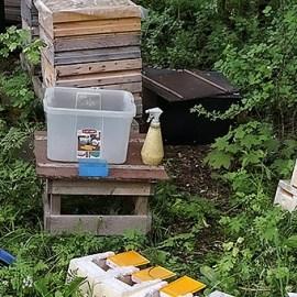 Fylla parningskupor med bin