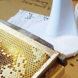 Varje biavlare bör VSH-testa sina avelsdrottningar