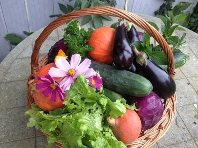 harvest-1225593__340