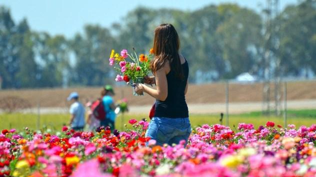 flower-3211800_960_720