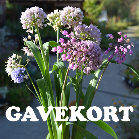 gavekort-450