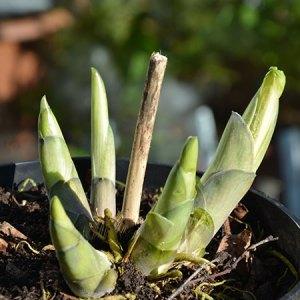 Bliv ferm til planteformering - Stiklingeformering og deling @ Naturplanteskolen | Hedehusene | Danmark